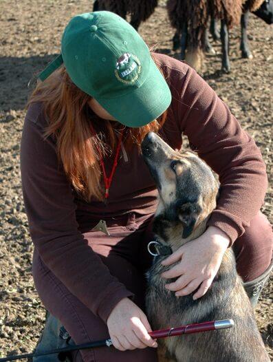 Aprendemos como trabajan los Border Collies con las ovejas con Cathy Blanc