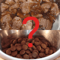 Comida para perros: pienso seco o comida en lata