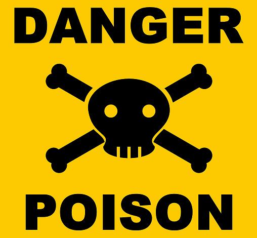 Alimentos toxicos para tu Border Collie
