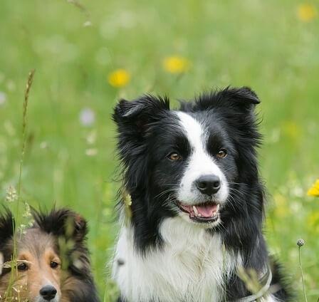 Cómo contribuye tu perro a tu salud