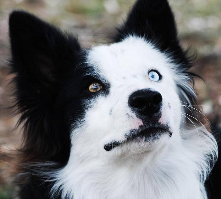 Cómo evitar que un perro ladre