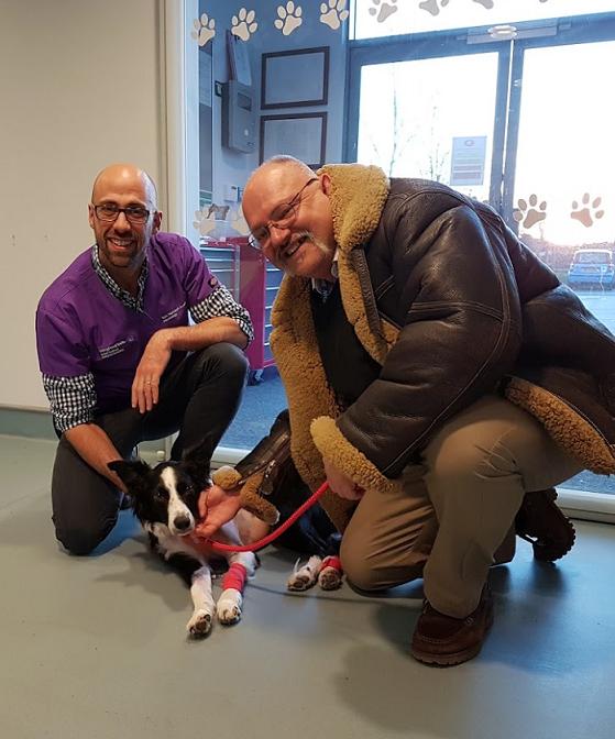 El primer Border Collie tratado de epilepsia en Uk con un pionero tratamiento