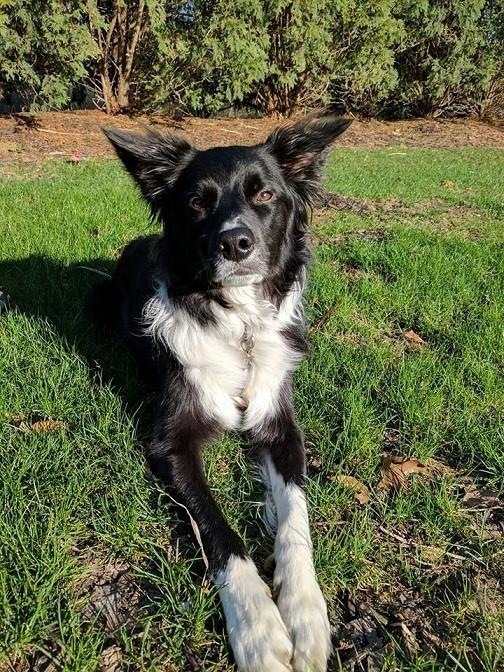 Evita los picotazos con el mejor collar antipulgas para perros