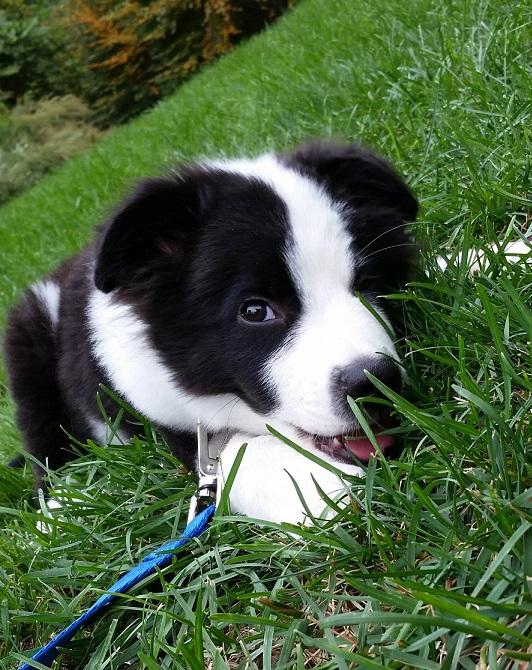 La mejor cámara para mascotas, para vigilar a tu peludete o simplemente porque lo amas