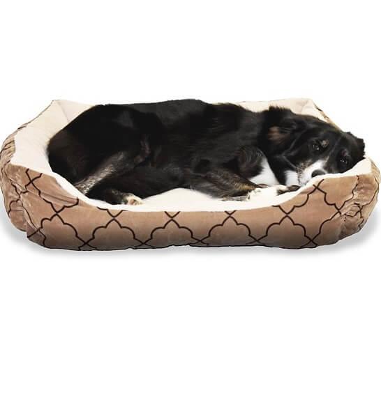 Las mejores camas para tu Border Collie