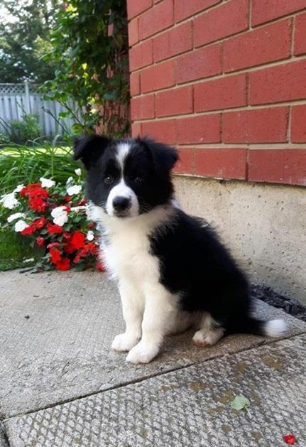 Los 4 errores que no debes cometer si tienes tu primer perro