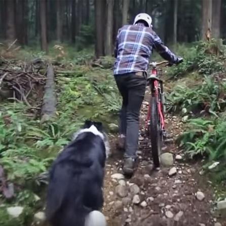 Los mejores consejos para ir en bici con tu perro