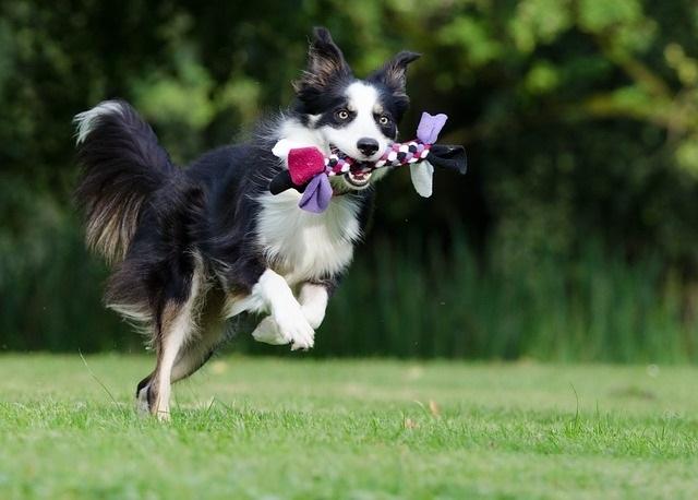 maneras deentretener a tu perro cuando estas en el trabajo