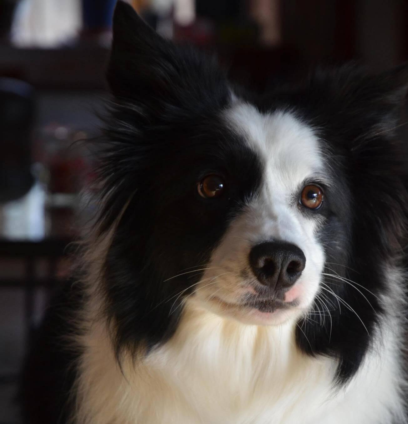 Recetas caseras para perros: Galletas de manzana