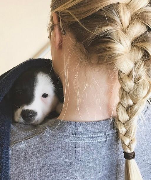 Un estudio demuestra que las mascotas son la mejor terapia para las personas que sufren enfermedades mentales